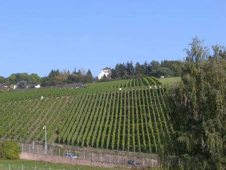 Vinmarker ved Trier