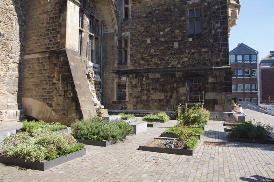 Lægeplanter bag rådhuset