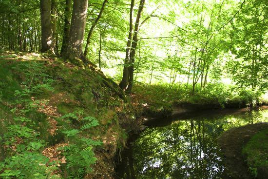 Glücksburg skov i Tyskland